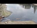 Слив нечистот в р.Кубань , Краснодар , Затон