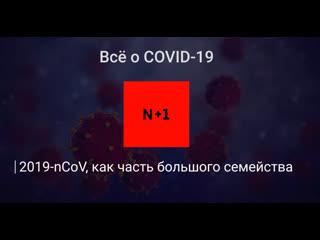 2019-nCoV как часть большого семеиства