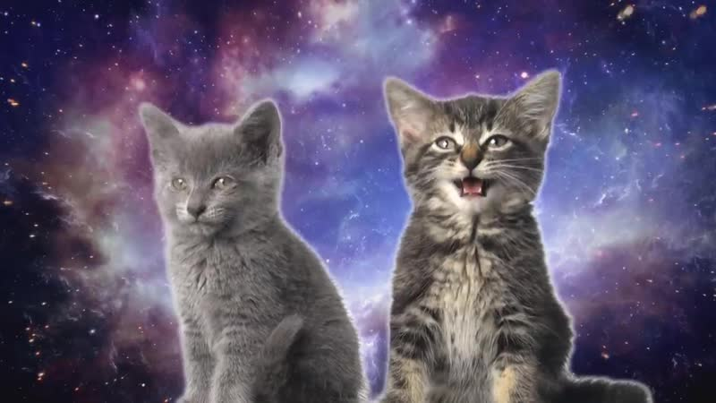 Space Cats Magic Fly