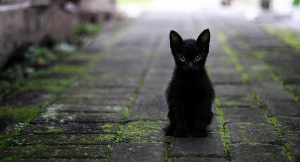 Кот и пастор Боже, а ты-то здесь откуда взялся Черное пятнышко испуганно метнулось из-под рук священника и забилось в угол комнаты, шипя раскаленным угольком. Мужчина машинально перекрестился уж