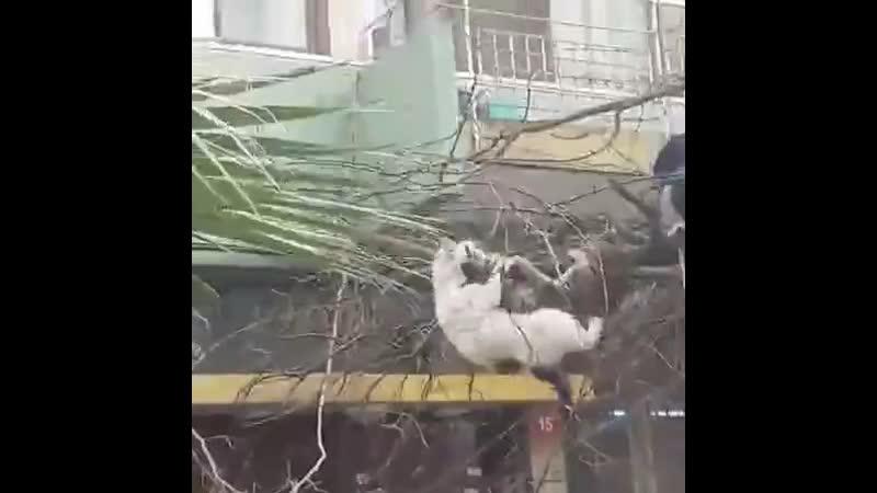 Коты затейники