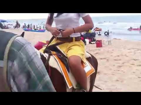 Pony ponyboy Arena0