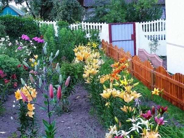 10 советов по уходу за лилиями Луковицы лилий можно высаживать осенью и весной. Если необходимо сохранить луковицы до посадки, их помещают в прохладное место (нижний ящик холодильника, подвал и