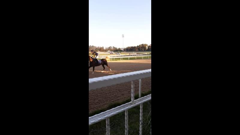 At yarışı izmir