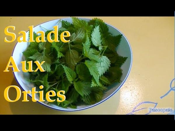 Salade aux orties un bonheur pour votre corps