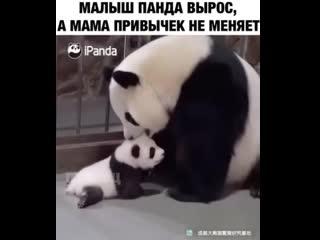 Мама не меняет свои привычки) -