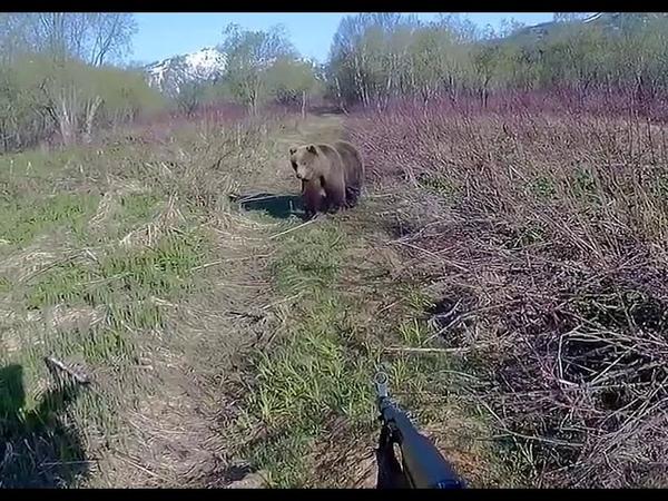 Противостояние человека и медведя на Камчатке