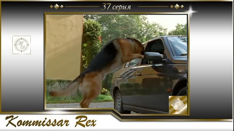 Komissar Rex 3x08 Комиссар Рекс 37 серия