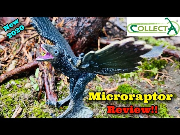 CollectA 2020 Deluxe Microraptor Review 1 6 Scale