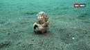 «Дикий мир океана Индонезия» Познавательный, природа, животные, путешествие, 2020