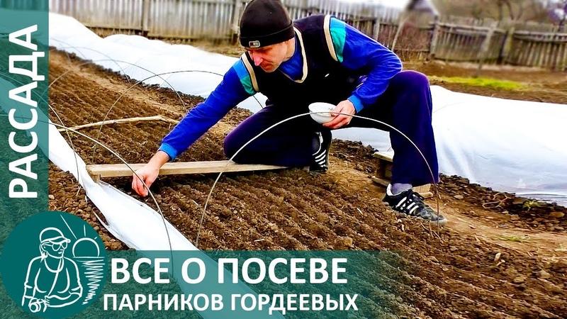 Выращивание рассады Всё о посеве парников по технологии Гордеевых