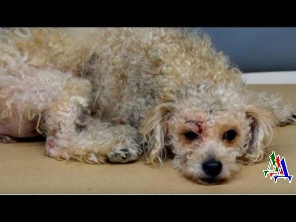 Раненую собаку выбросили в мусор у нее обнаружилась травма головы и глубокий порез у глаза