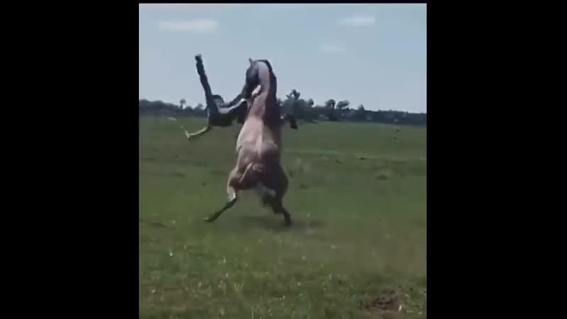 Ковбой мастер