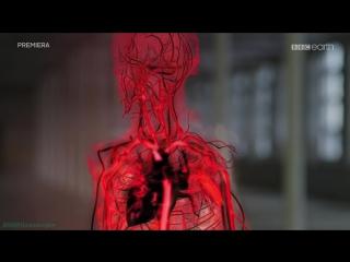 BBC Удивительный мир крови (Научно-познавательный, исследования, 2015)