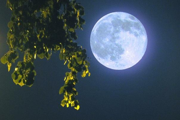 Лунный календарь дачника.