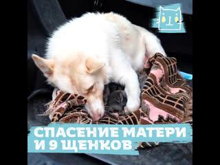 Спасли маму-собаку с девятью щенками