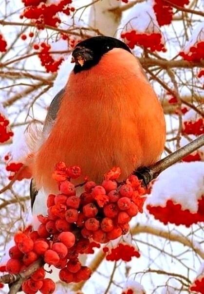 Самый яркий символ нашей зимы! Неописуемая красота!