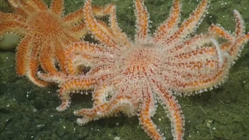Морские существа Тихого океана