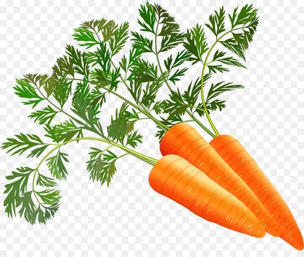 ЕШЬТЕ ПОБОЛЬШЕ МОРКОВИ Морковь это потрясающий воображение богатством витаминов и минералов корнеплод. Содержит бета-каротин, который превращается в нашем организме в витамин А. Очень полезна