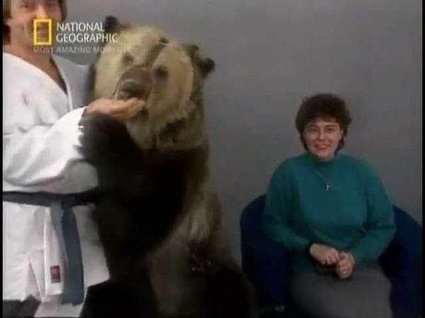 Медведь растерзал телеведущих