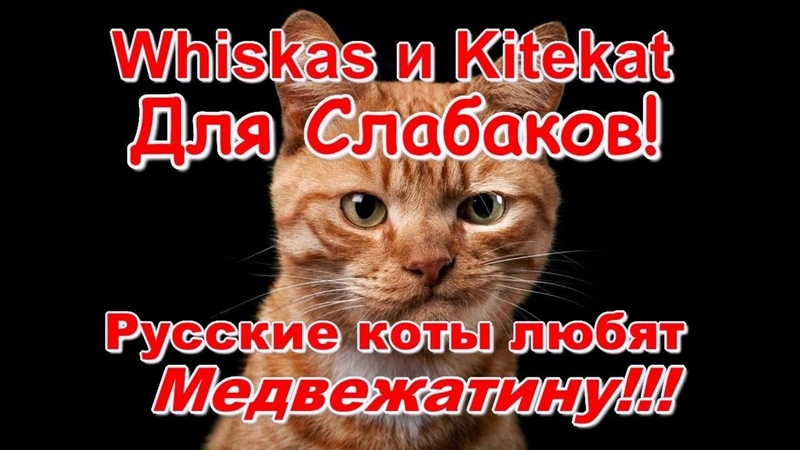 Whiskas and Kitekat For Wimps Russian cats love Medvezhatina