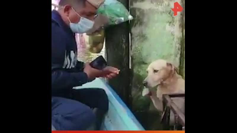 Спасение собаки от наводнения РЕНТВ