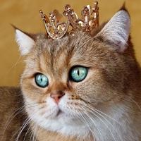 ♥♥♥  ЦАРСТВО КОШЕК ♥♥♥