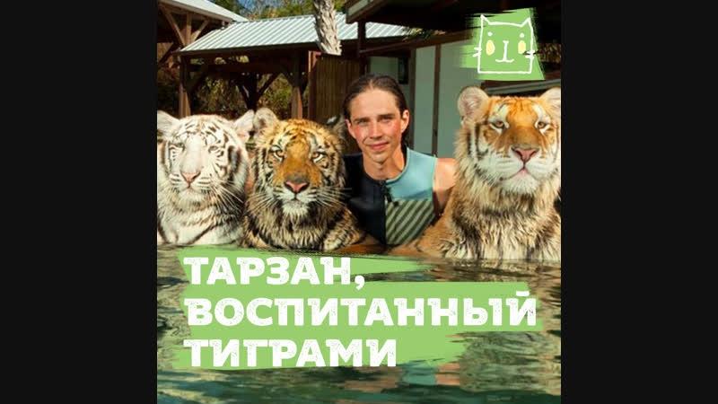 Тарзан и его тигры