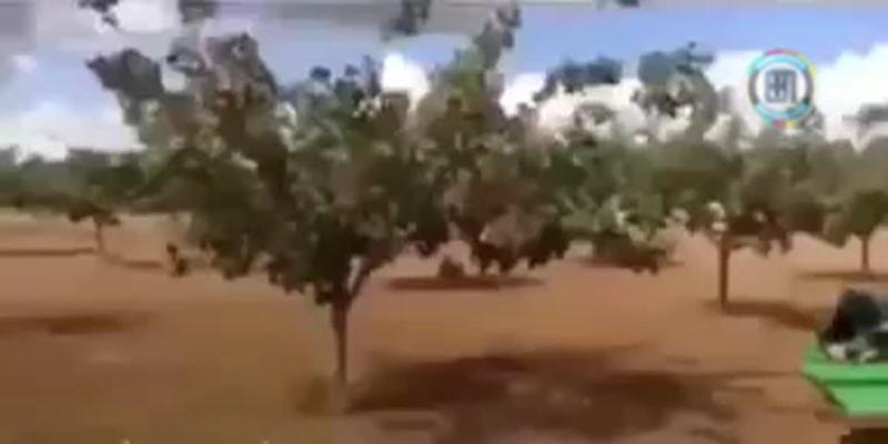 Новый способ уборки урожая