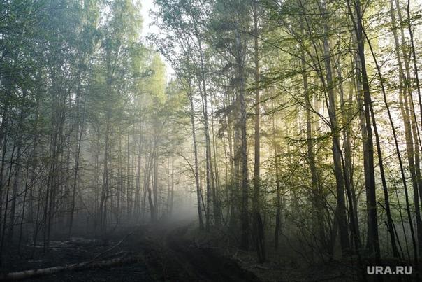 В лесу под Ханты-Мансийском нашли мертвую пенсионе...