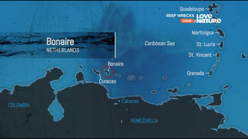 Корабельные рифы Обломки у рифа Бонейра 1 серия из 5 2016 HD 1080