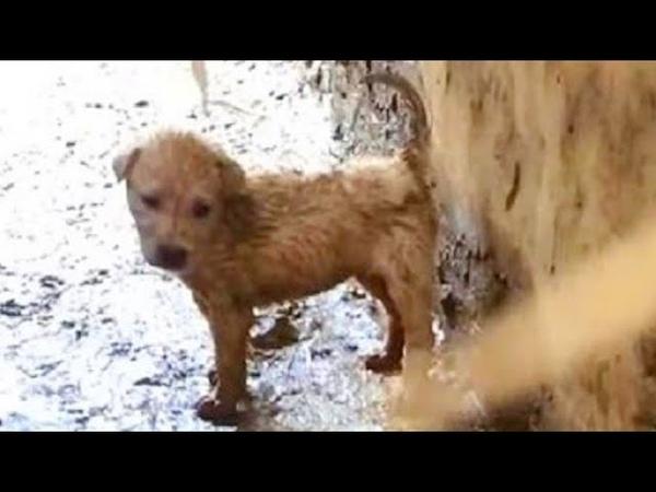 Маленький щенок спрятался в трубе, он хотел кушать, но окружающего мира он боялся еще больше...