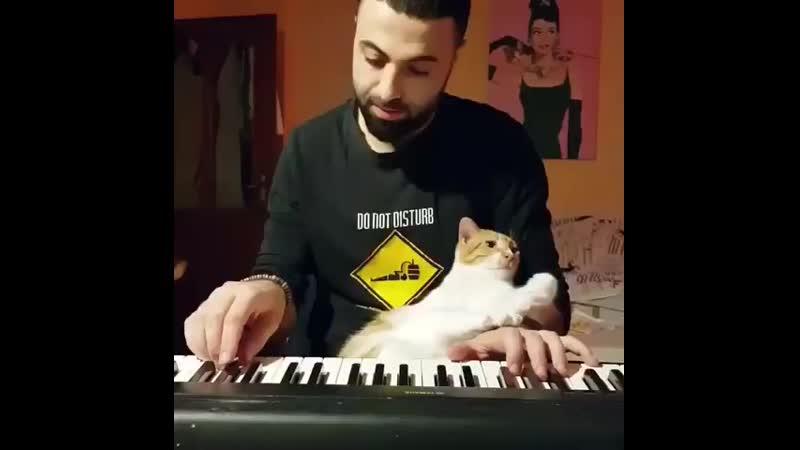 Кот и кошачья любовь-морковь.))