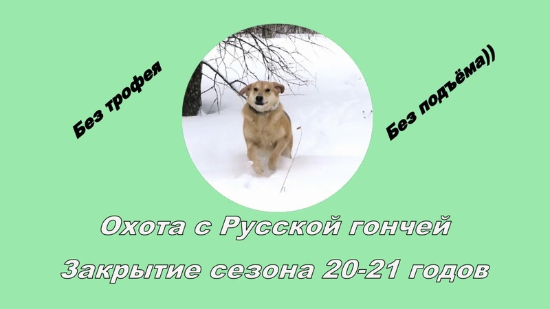 Закрытие сезона Охота на зайца с Русской гончей 28 02 21
