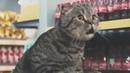 Про животных. СМЕШНЫЕ коты, котята и кошки. Прикольное видео!