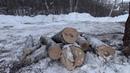В Фатьяновском парке вырублено несколько живых деревьев. Пораженные короедом не тронуты.