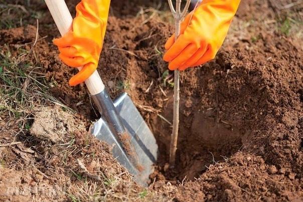 Копилка секретов для садоводов! Полезная информация
