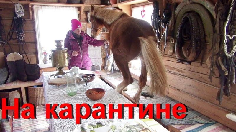 Приколы с конями Шел 10 ый день карантина Жесть